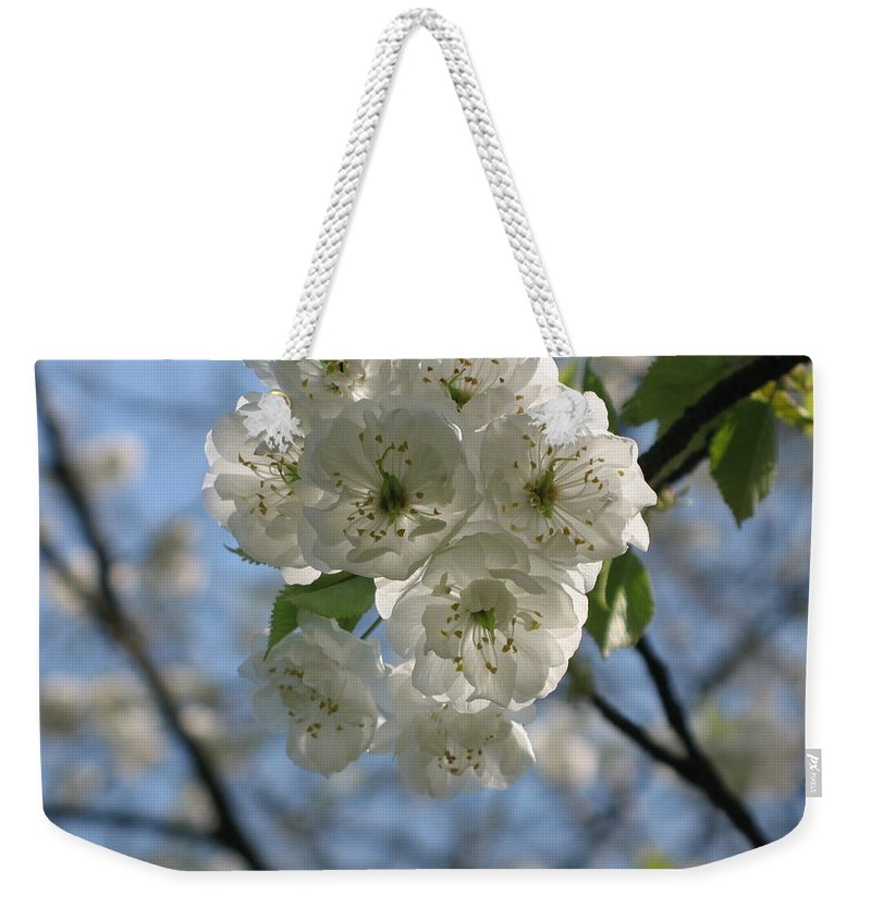 Cherry Weekender Tote Bag featuring the photograph Cherry Tree Petals by Christiane Schulze Art And Photography