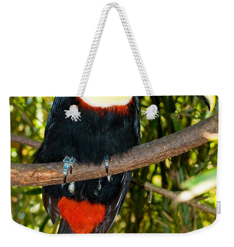 Nature Weekender Tote Bag featuring the photograph Chestnut Mandibled Toucan by Millard H. Sharp
