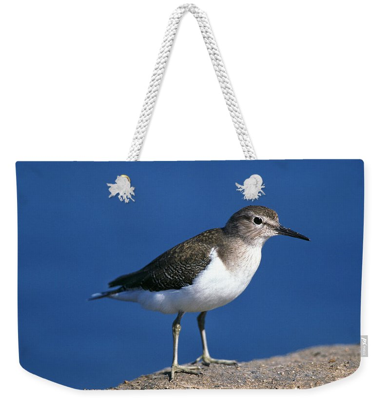 Adult Weekender Tote Bag featuring the photograph Chevalier Guignette Tringa Hypoleucos by Gerard Lacz