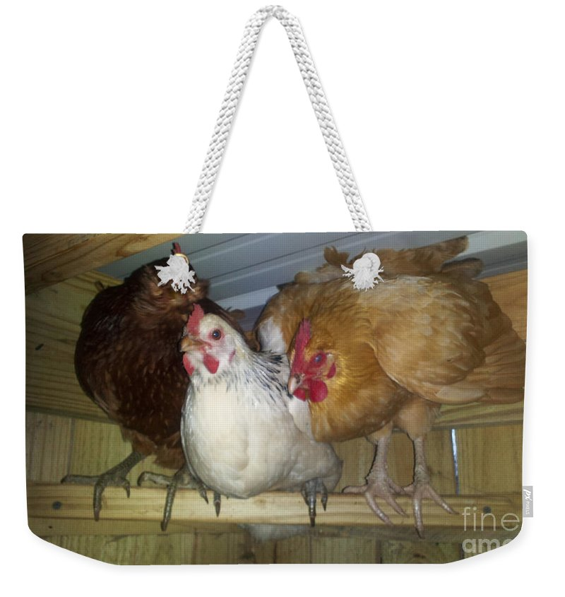 Bird Weekender Tote Bag featuring the photograph Chick Trio by Donna Brown