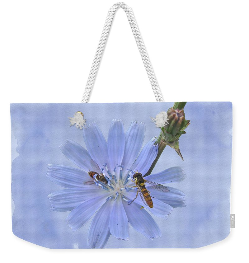 Chicory Weekender Tote Bag featuring the photograph Chicory Wildflower - Cichorium Intybus by Mother Nature