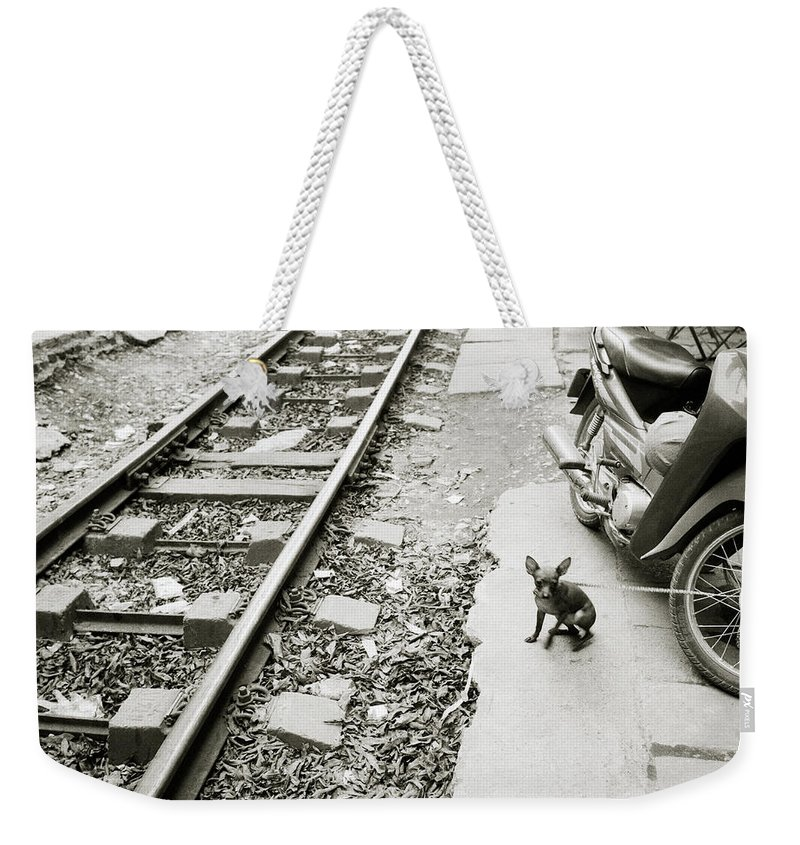 Asia Weekender Tote Bag featuring the photograph Chihuahua In Hanoi by Shaun Higson