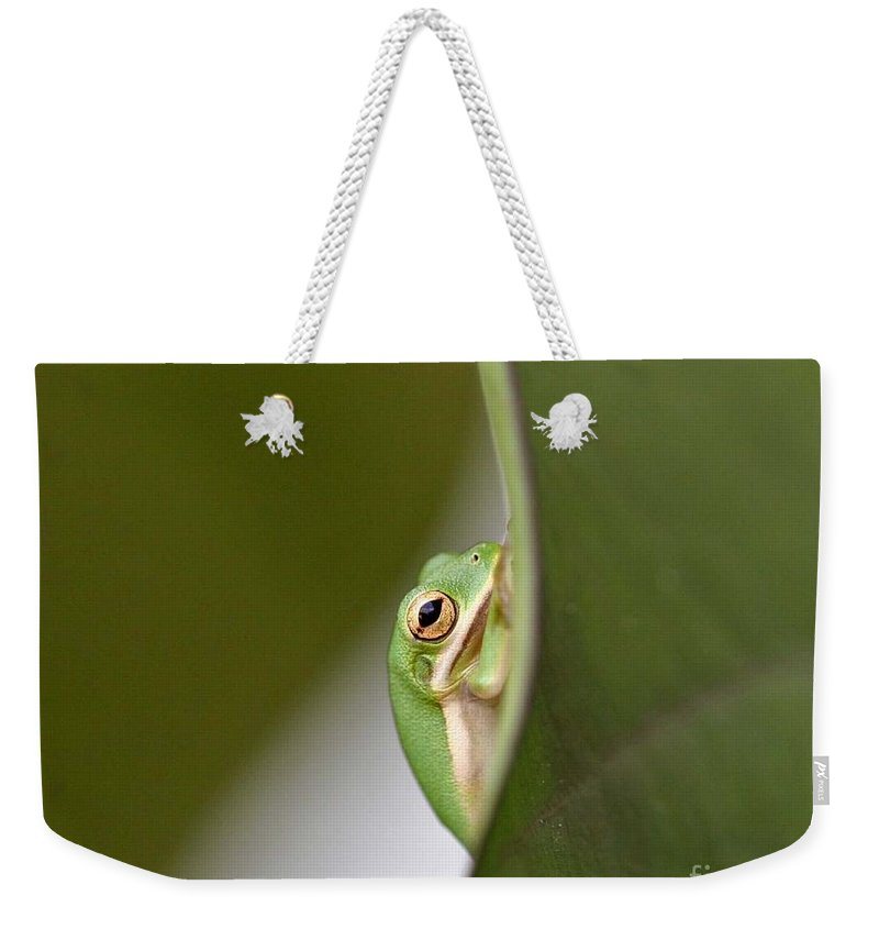 Nature Weekender Tote Bag featuring the photograph Chillin by Scott Pellegrin