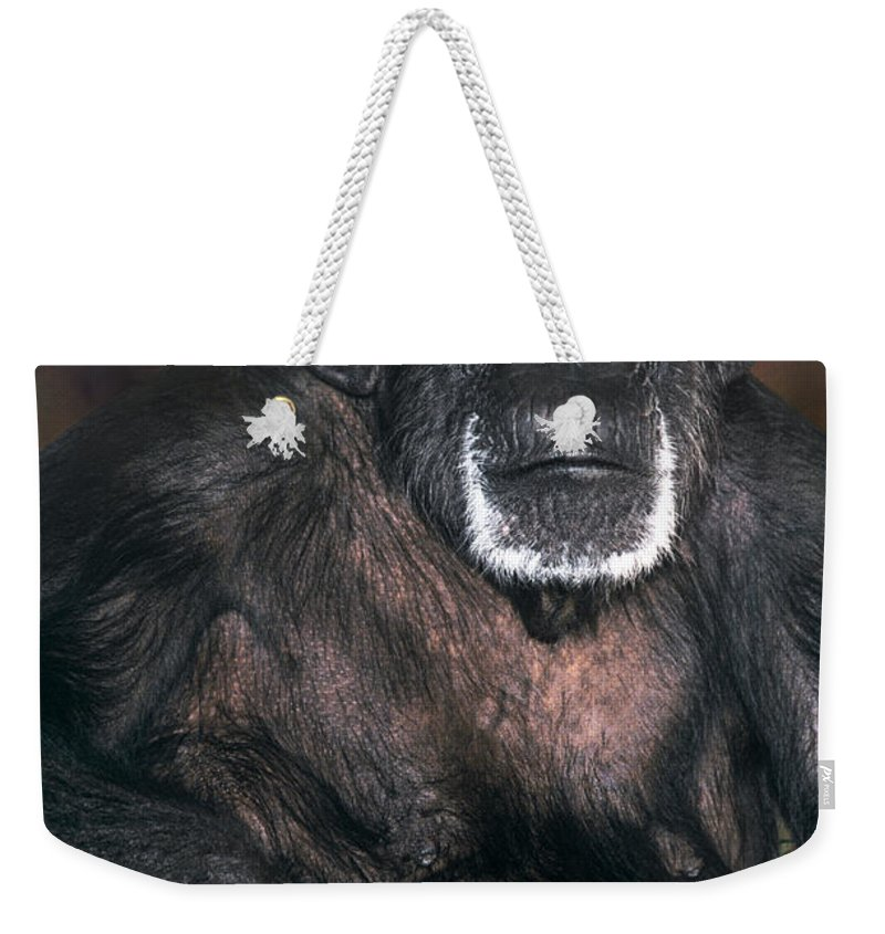 Chimpanzee Weekender Tote Bag featuring the photograph Chimpanzee Portrait Endangered Species Wildlife Rescue by Dave Welling