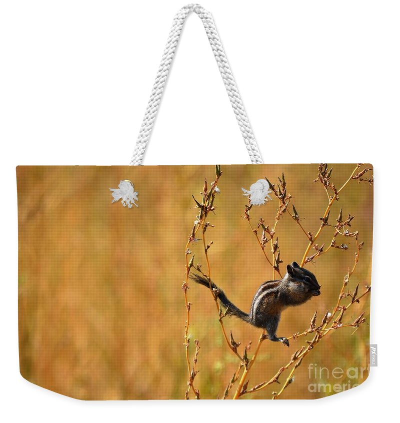 Wildlife Weekender Tote Bag featuring the photograph Chipmunk Cheeks by Deanna Cagle