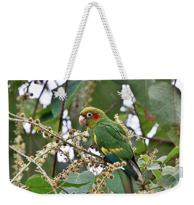 Parrot Weekender Tote Bag featuring the photograph Chiriqui Conure by Heiko Koehrer-Wagner