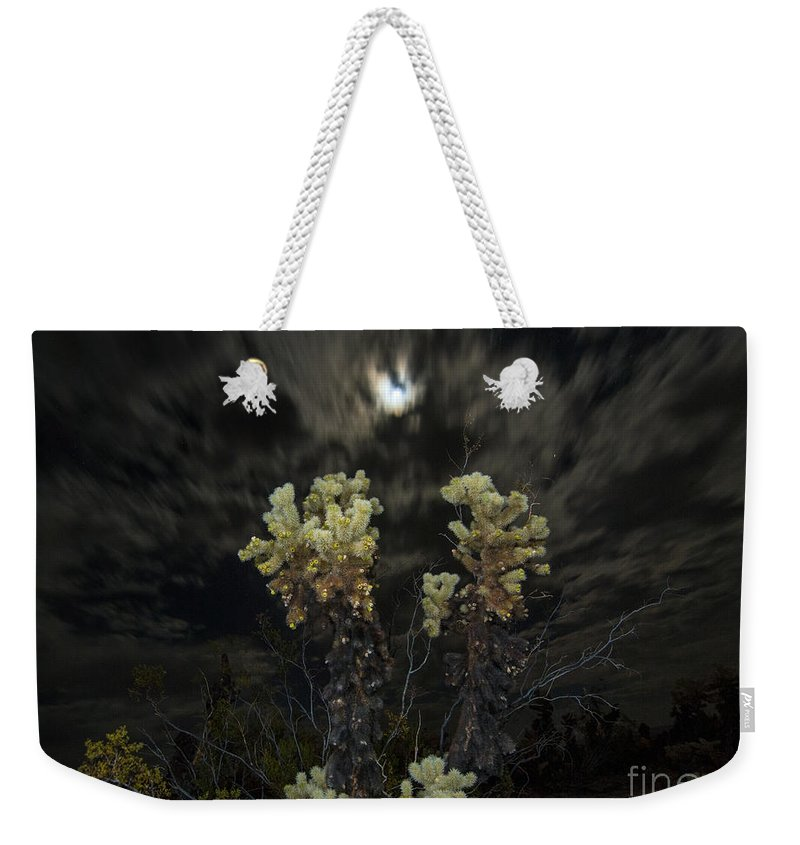 Cholla Cactus Weekender Tote Bag featuring the photograph Cholla Light - Joshua Tree National Park by Jamie Pham