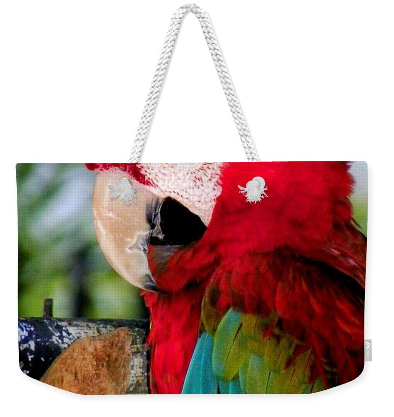 Parrot Weekender Tote Bag featuring the photograph Chowtime by Karen Wiles