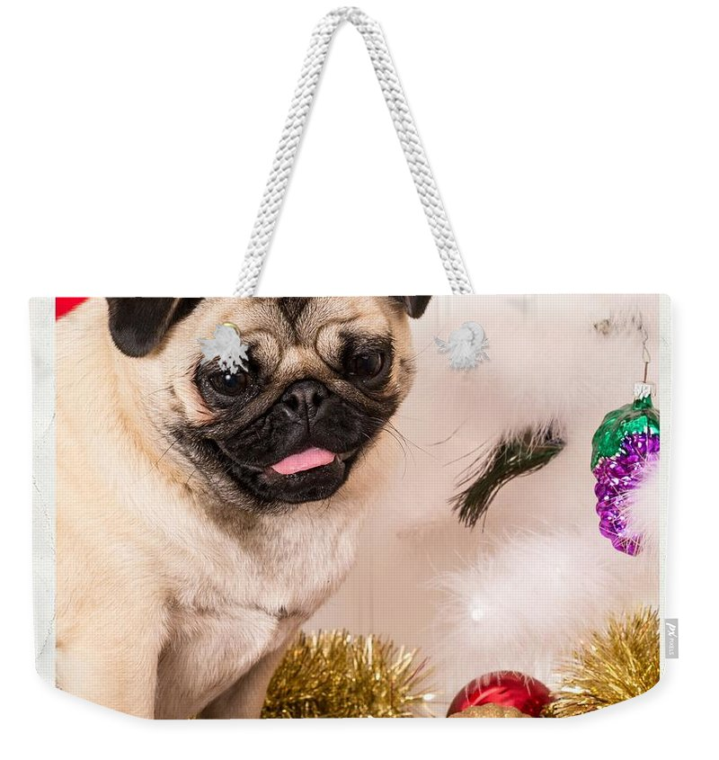 Pug Weekender Tote Bag featuring the photograph Christmas Morning by Edward Fielding