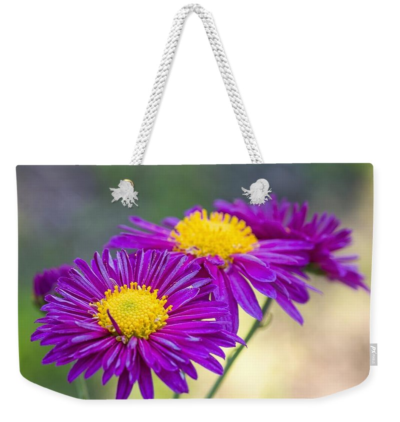 Flower Weekender Tote Bag featuring the photograph Chrysanthemum by Paulo Goncalves