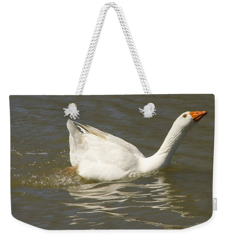 Tulsa Photographs Weekender Tote Bag featuring the photograph Chuck The Duck Looking At You by Vernis Maxwell