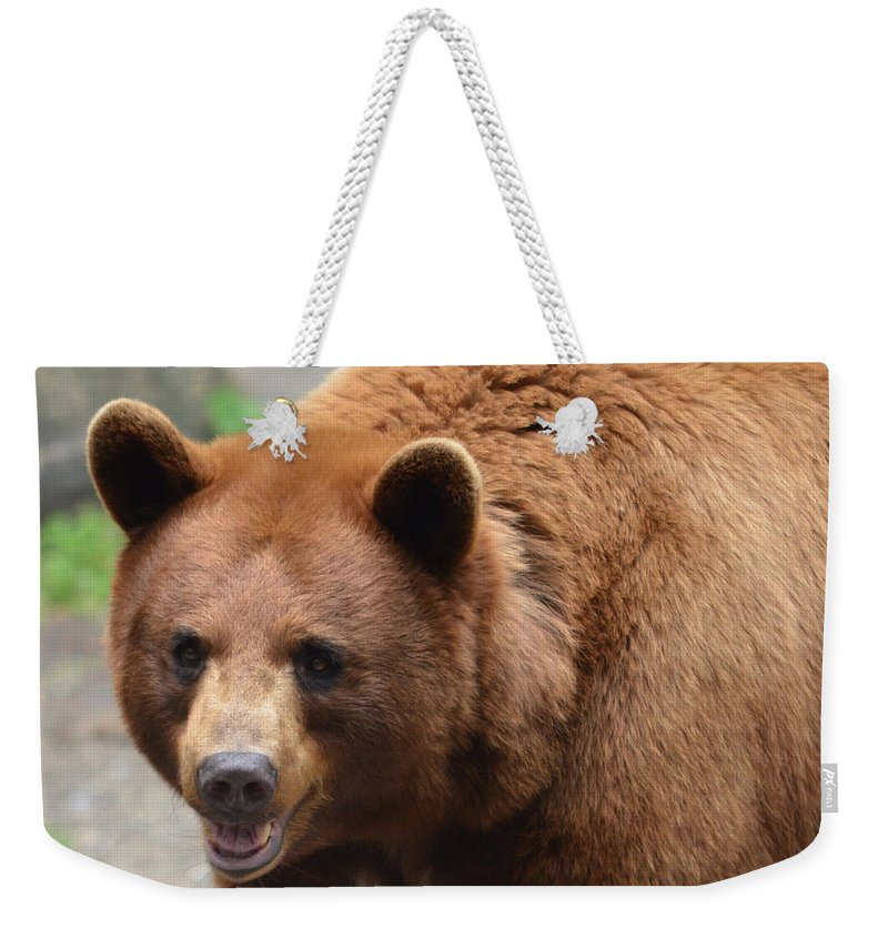 Brown Weekender Tote Bag featuring the photograph Cinnamon Black Bear by Richard Bryce and Family