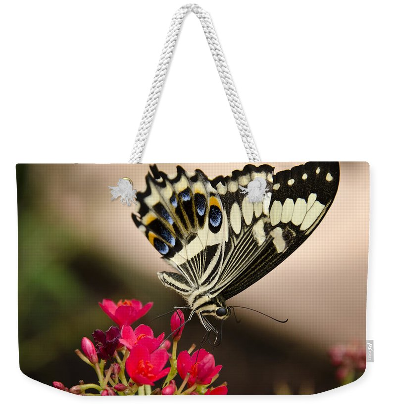 Black And White Butterfly Weekender Tote Bag featuring the photograph Citrus Swallowtail by Saija Lehtonen