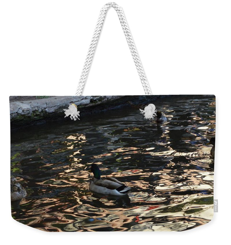 Architecture Weekender Tote Bag featuring the photograph City Ducks 2 by Shawn Marlow