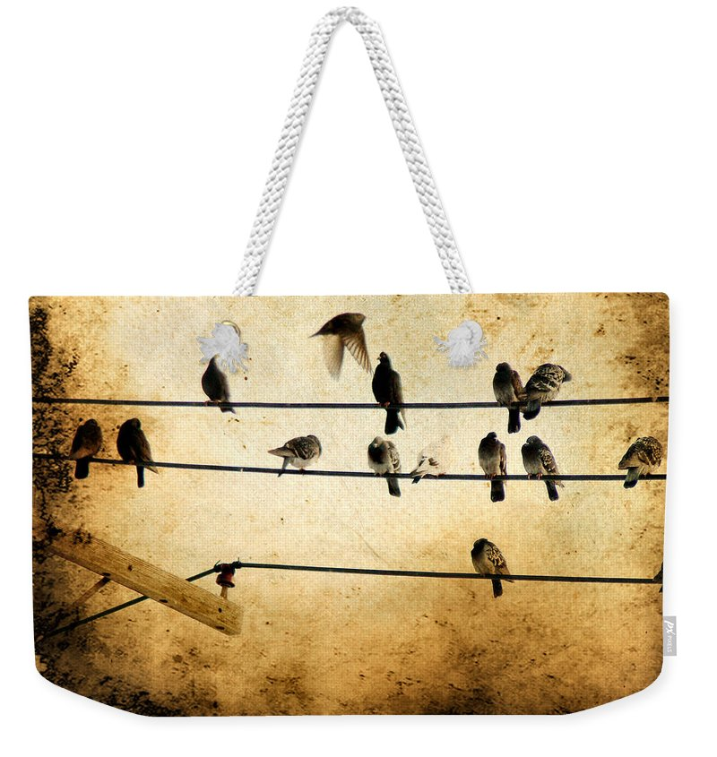 City Birds Weekender Tote Bag featuring the photograph City Dwellers by Gothicrow Images
