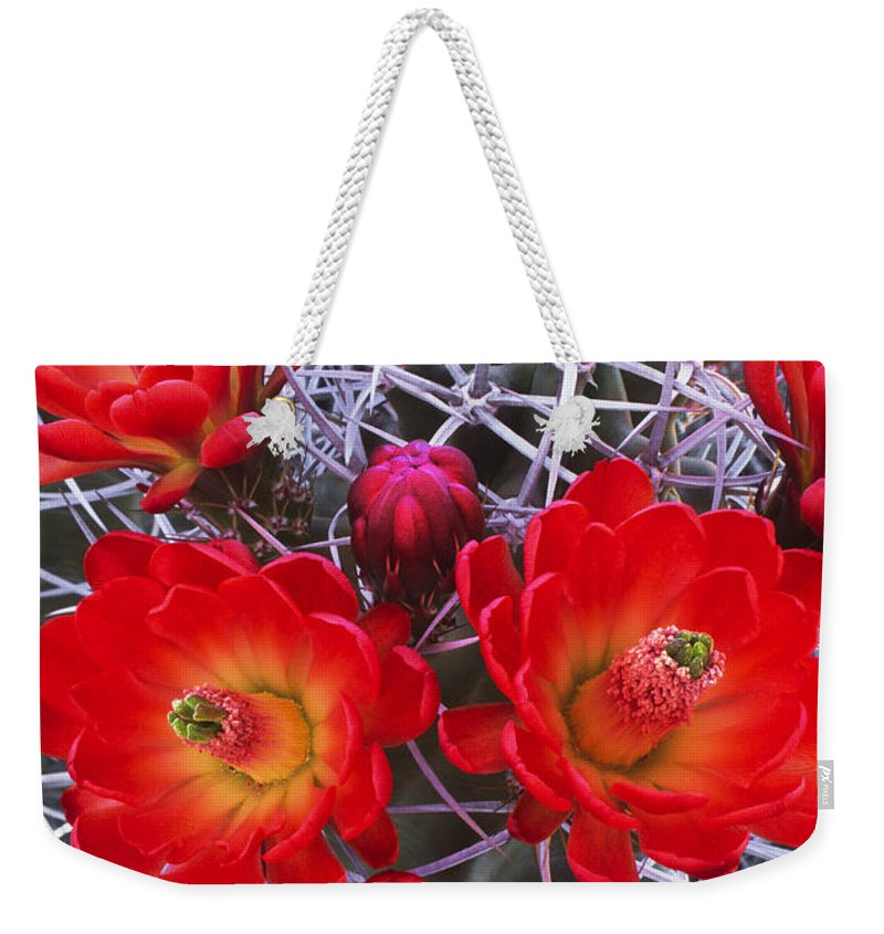Claretcup Cactus Weekender Tote Bag featuring the photograph Claretcup Cactus In Bloom Wildflowers by Dave Welling