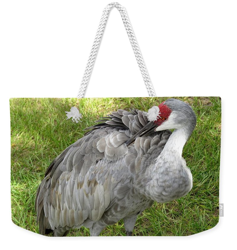 Sandhill Cranes Weekender Tote Bag featuring the photograph Cleaning Feathers by Zina Stromberg