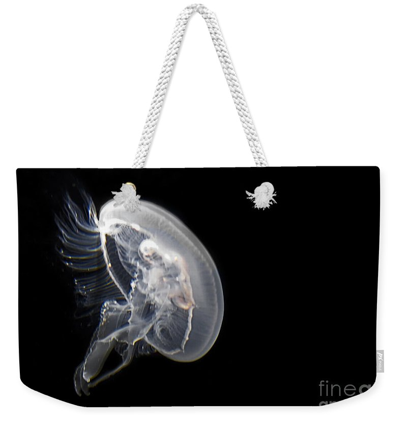 Jelly Fish Weekender Tote Bag featuring the photograph Clear Jelly Fish In Dark Water Art Prints by Valerie Garner