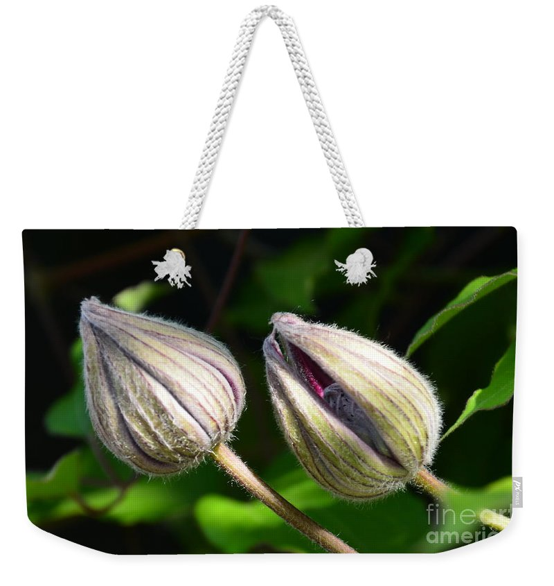 Clematis Weekender Tote Bag featuring the photograph Clematis Buds by Randy J Heath