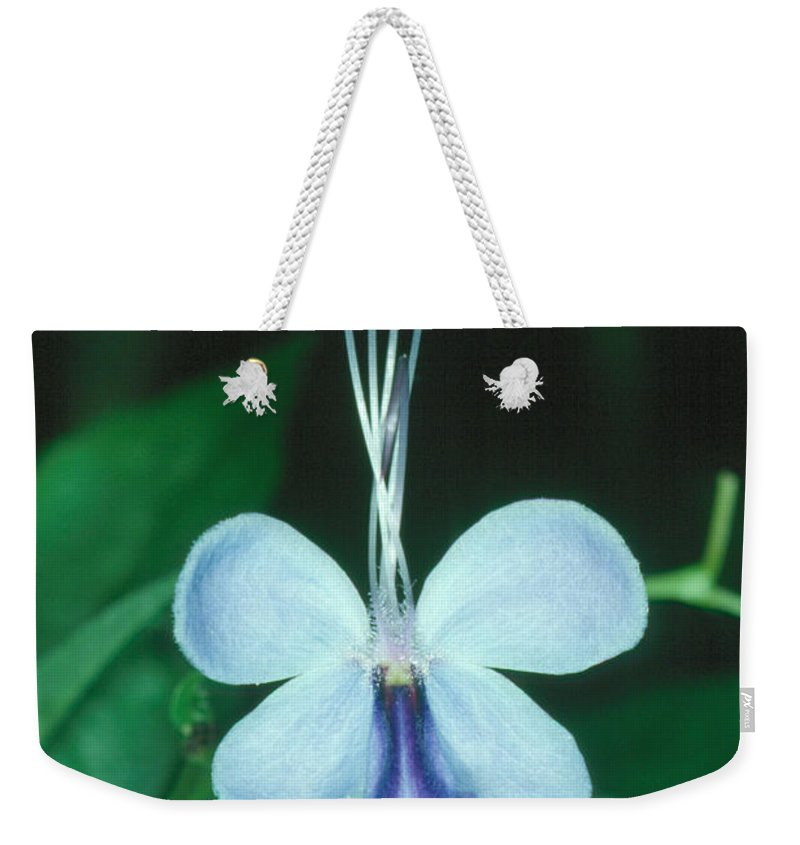Flower Weekender Tote Bag featuring the photograph Clerodendrum 1 by Andy Shomock