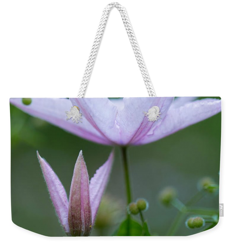 Climbing Upwards Weekender Tote Bag featuring the photograph Climbing Upwards by Dale Kincaid