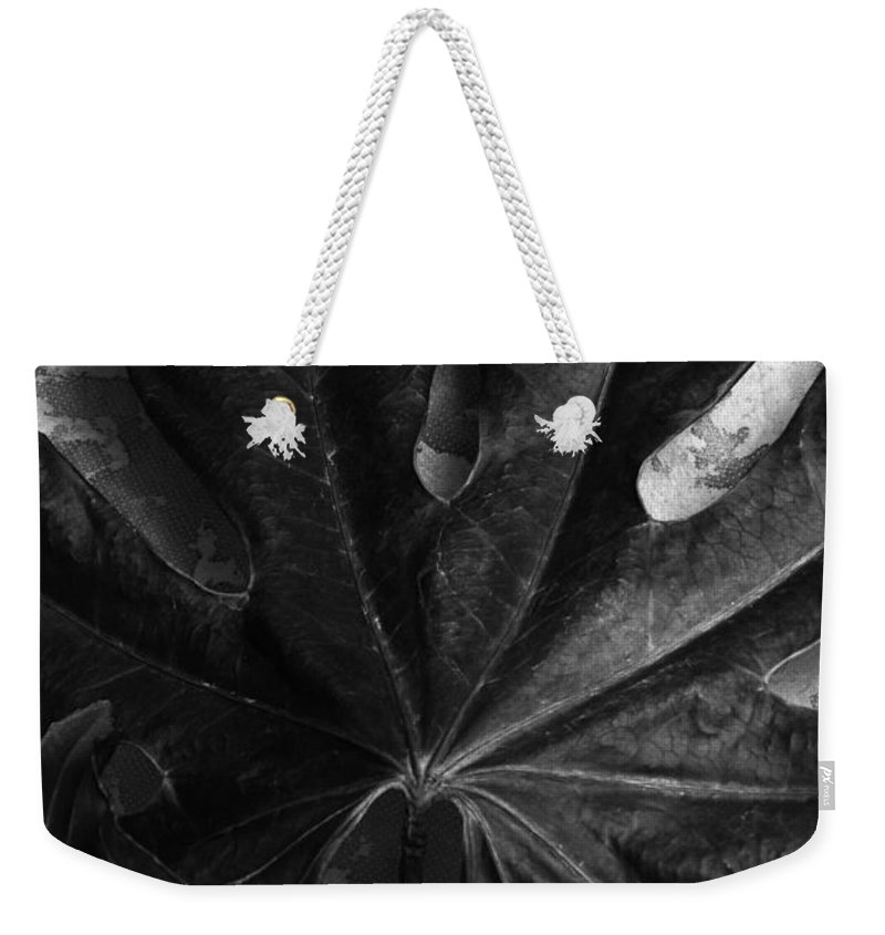 Leaf Weekender Tote Bag featuring the photograph Close by Randi Grace Nilsberg