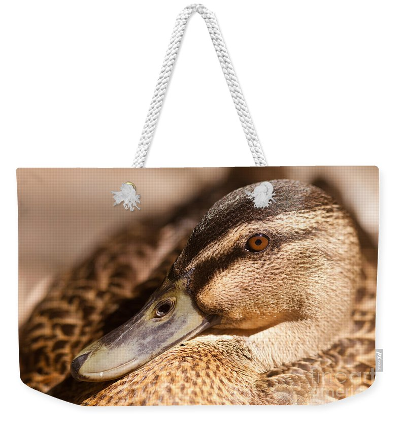 Adult Weekender Tote Bag featuring the photograph Close Up Shot Of Female Mallard Duck by Stephan Pietzko
