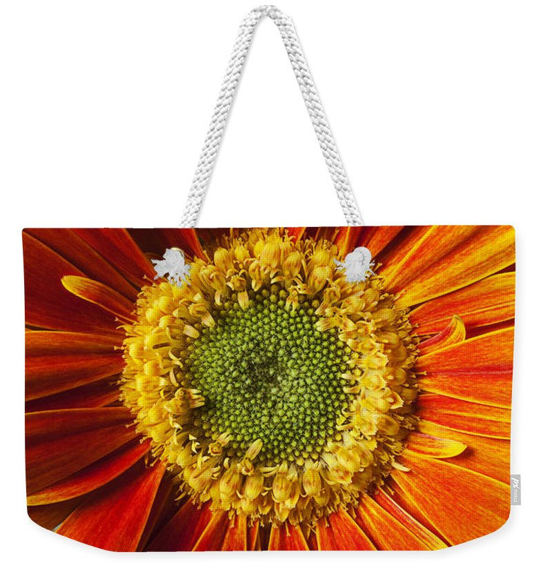 Gerbera Weekender Tote Bag featuring the photograph Close Up Yellow Orange Mum by Garry Gay