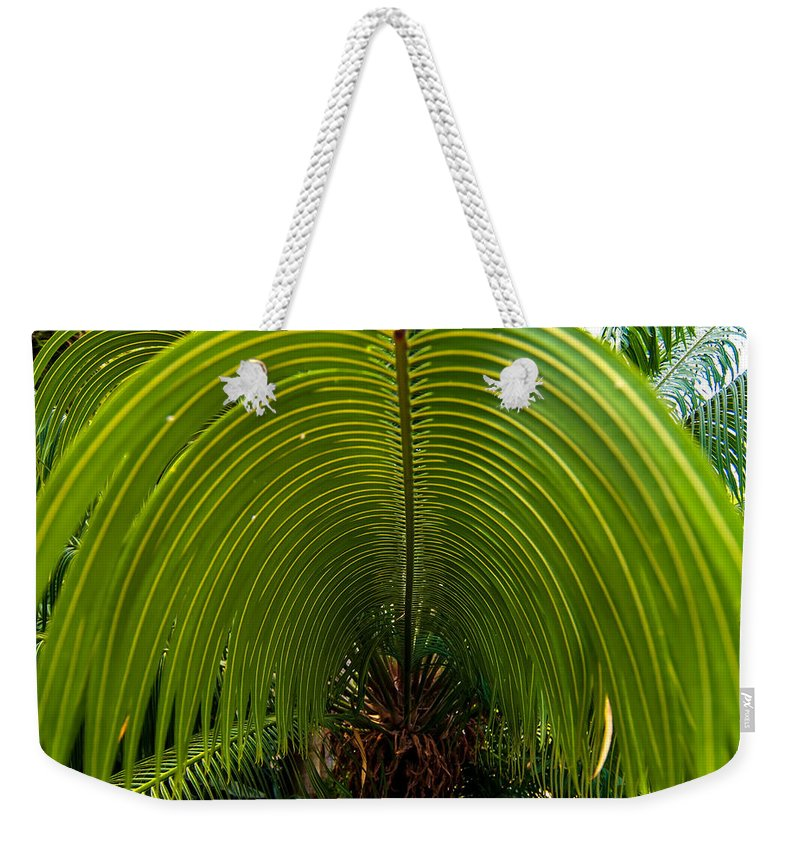 Botanical Weekender Tote Bag featuring the photograph Closeup Of A Palm Tree Leaf by Alex Grichenko