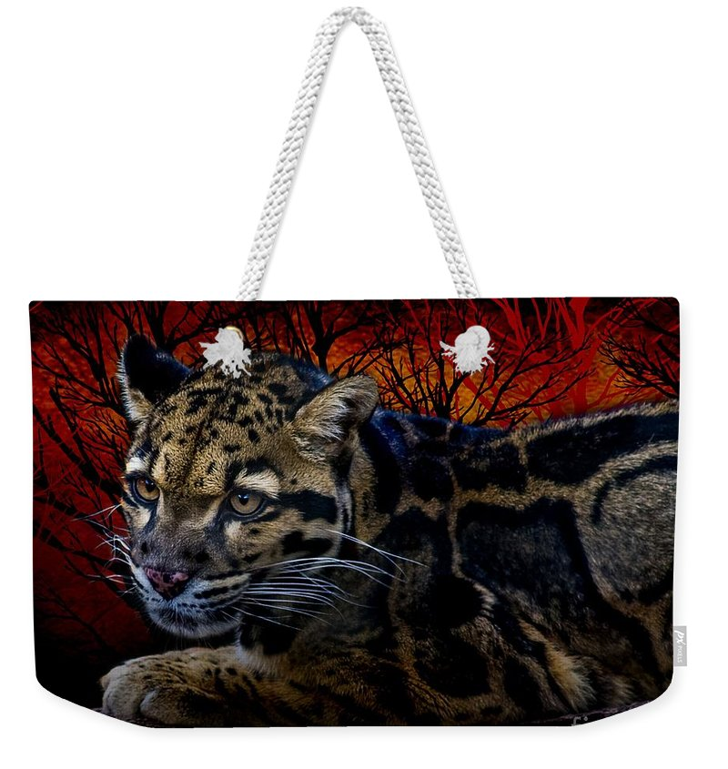Big Cats Weekender Tote Bag featuring the photograph Clouded Leopard Two by Ken Frischkorn