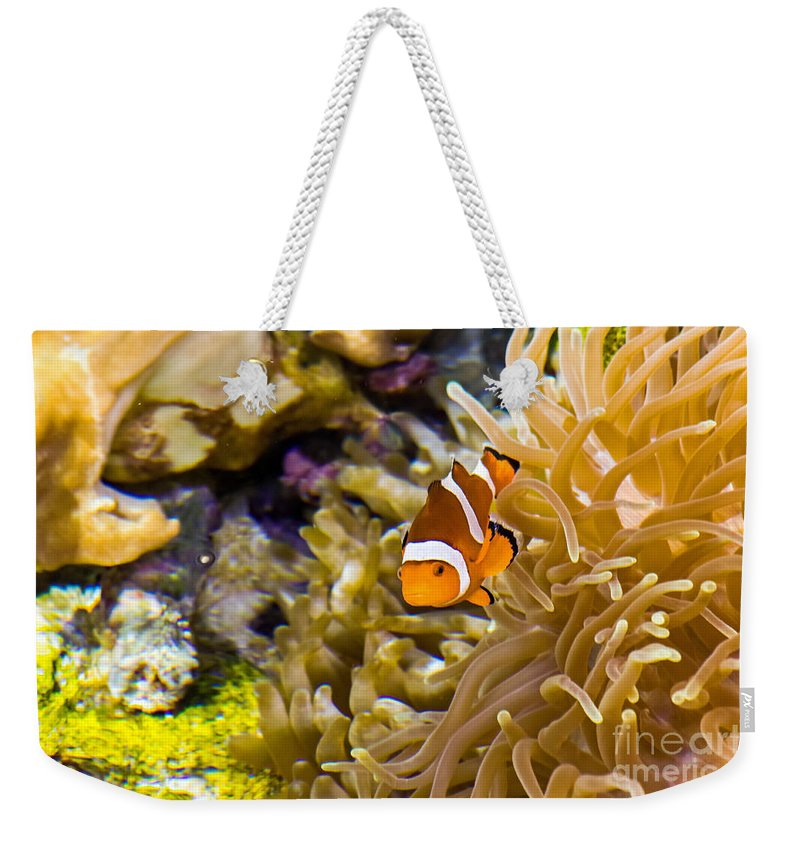 Aquarium Weekender Tote Bag featuring the photograph Clownfish by Kate Brown