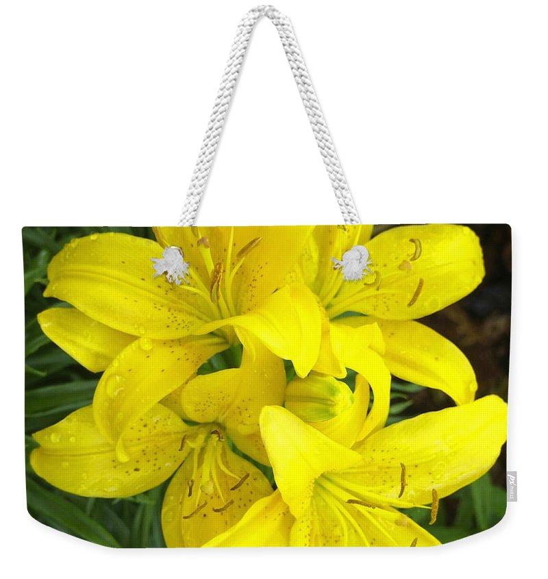 Nature Weekender Tote Bag featuring the photograph Cluster Of Yellow Lilly Flowers In The Garden by Amy McDaniel