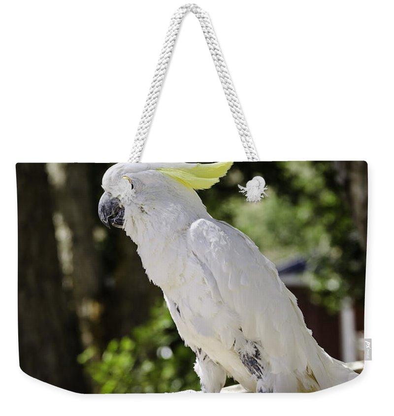 Cockatoo Weekender Tote Bag featuring the photograph Cockatoo White Parrot by LeeAnn McLaneGoetz McLaneGoetzStudioLLCcom