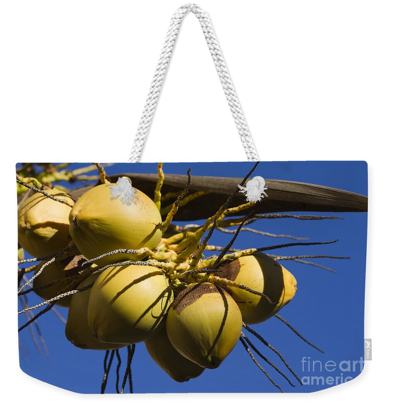 Coconut Weekender Tote Bag featuring the photograph Coconut 1 by Teresa Zieba