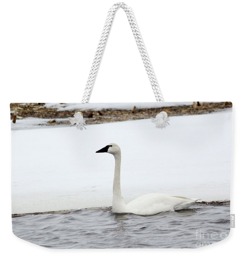 Swan Weekender Tote Bag featuring the photograph Cold Swim by Lori Tordsen