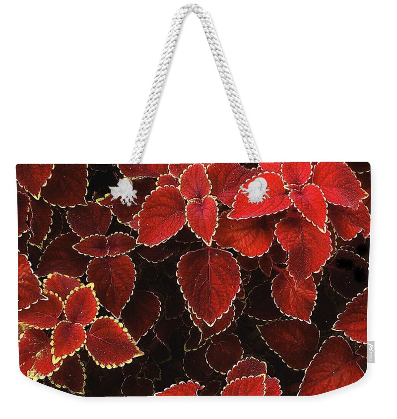 Plant Weekender Tote Bag featuring the photograph Coleus by Jessica Jenney