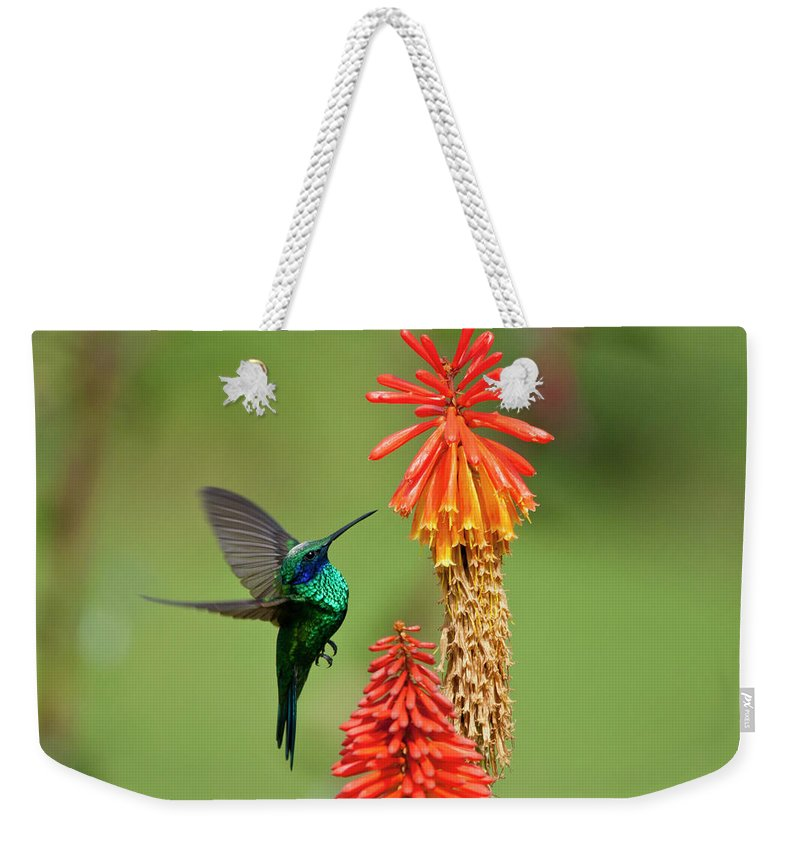 Animal Themes Weekender Tote Bag featuring the photograph Colibri Coruscans by Photo By Priscilla Burcher
