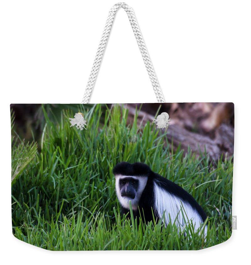 Grass Weekender Tote Bag featuring the photograph Colobus Monkey by Mark Newman