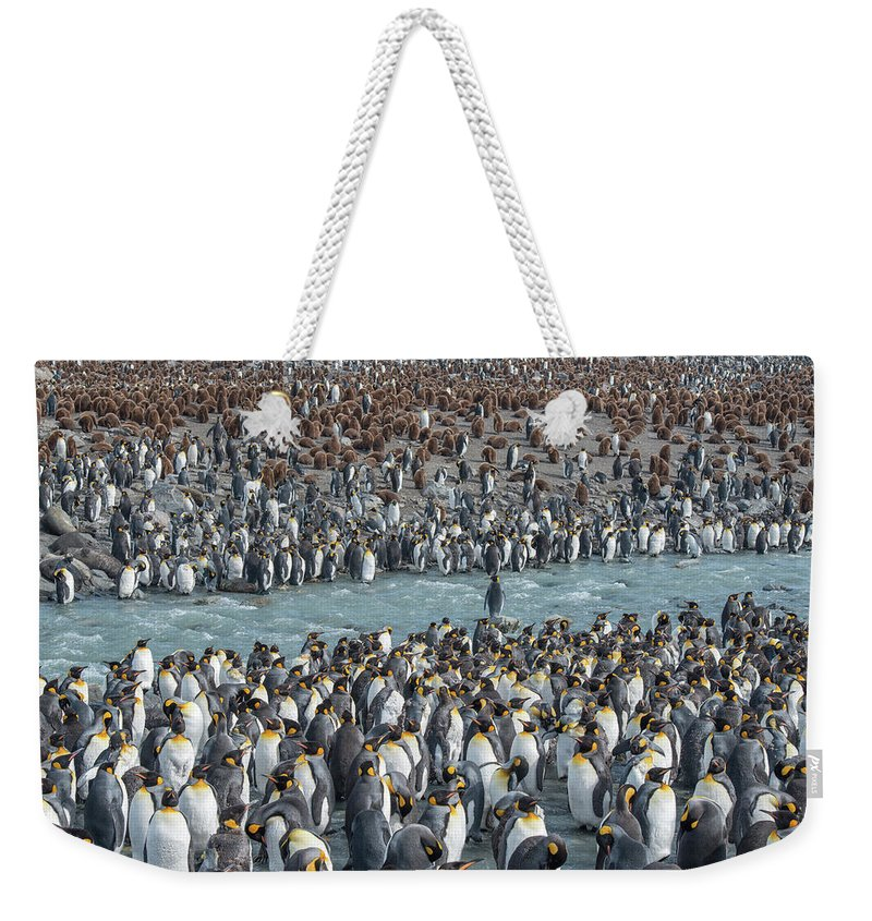 Bird Weekender Tote Bag featuring the photograph Colony Of King Penguins, Aptenodytes by Tom Murphy