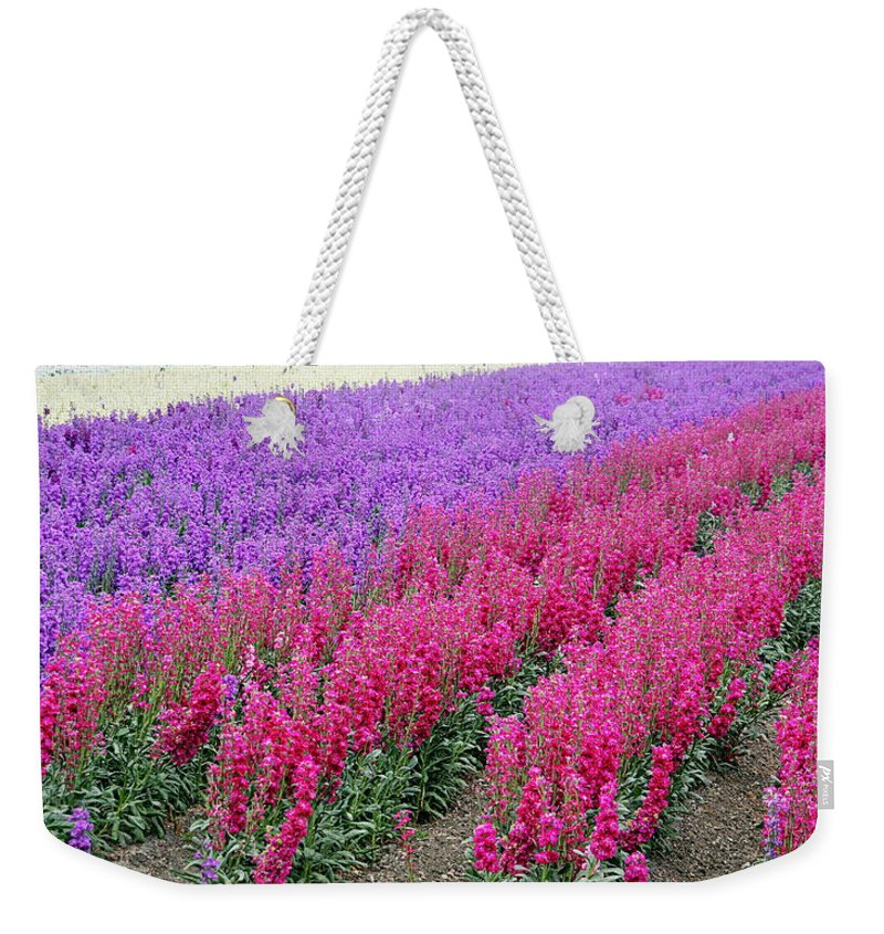 Flowers Weekender Tote Bag featuring the photograph Colorful Flower Fields by AJ Schibig