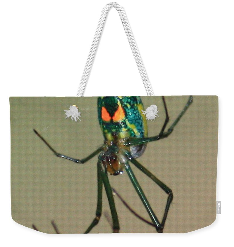 Spider Weekender Tote Bag featuring the photograph Colorful Spider In The Swamp by Carol Groenen