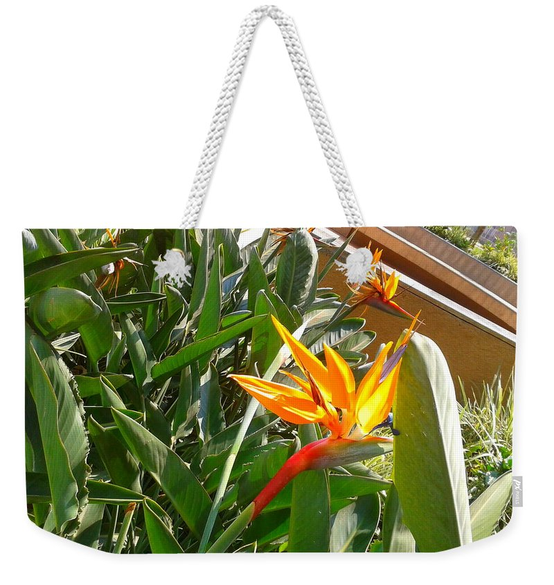 Flower Weekender Tote Bag featuring the photograph Combination Of Yellow-orange And Red Flower  by Artist Nandika Dutt