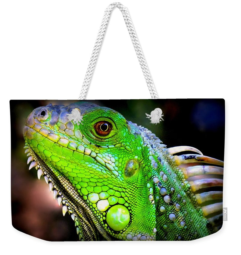 Iguanas Weekender Tote Bag featuring the photograph Come A Little Closer by Karen Wiles
