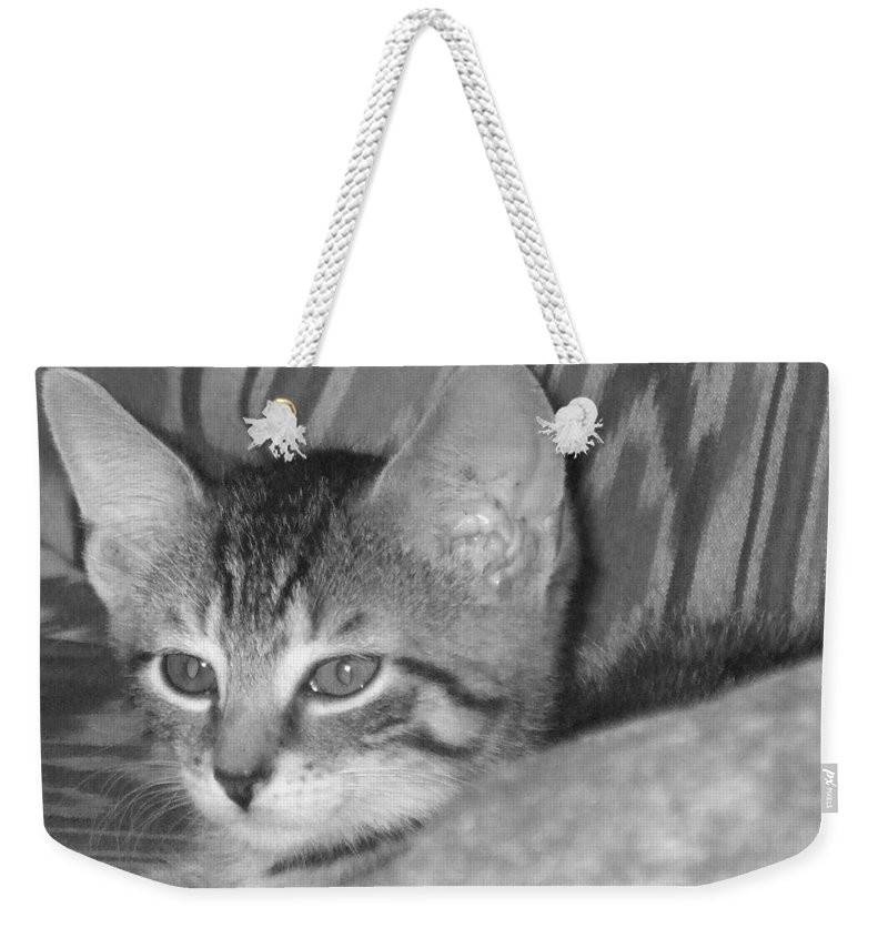 Kitten Weekender Tote Bag featuring the photograph Comfy Kitten by Pharris Art