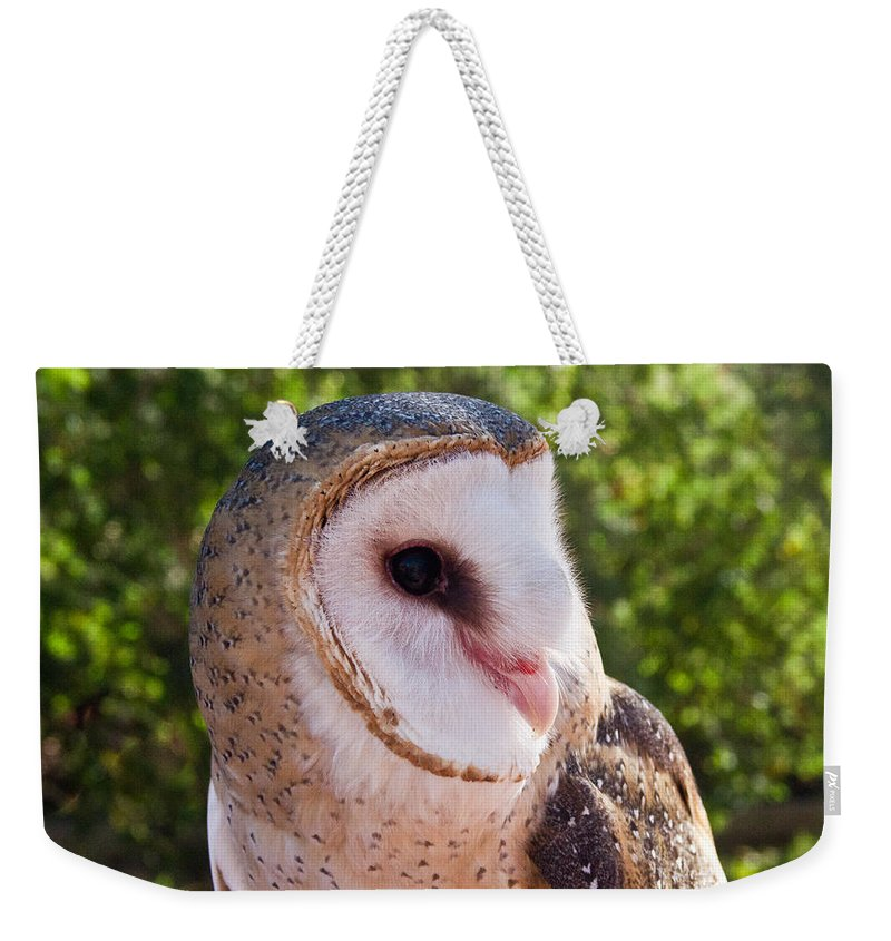 Common Barn Owl Weekender Tote Bag featuring the photograph Common Barn Owl 10 by Douglas Barnett