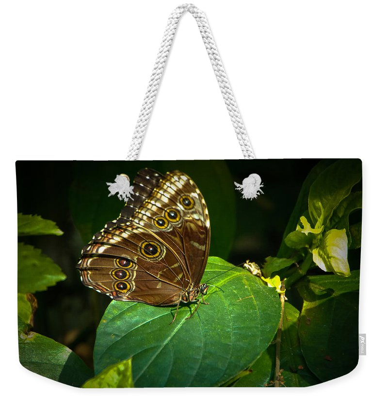 Moth Weekender Tote Bag featuring the photograph Common Blue Morpho Moth by Grace Grogan