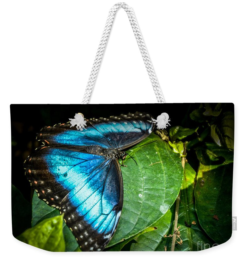Blue Weekender Tote Bag featuring the photograph Common Blue Morpho by Ronald Grogan