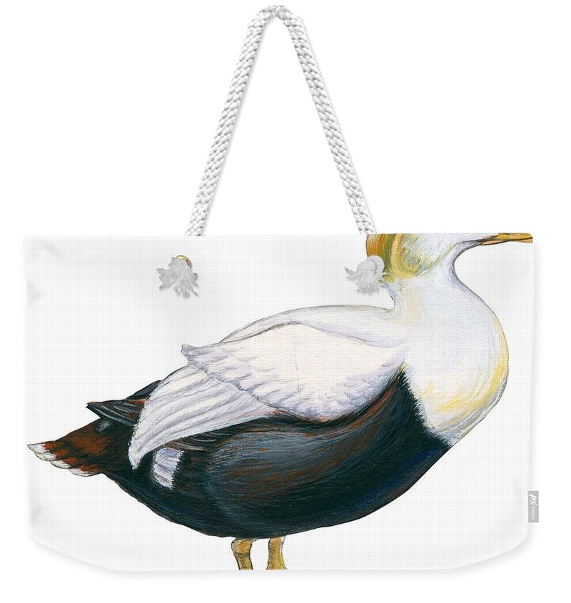 No People; Horizontal; Side View; Full Length; White Background; One Animal; Wildlife; Close Up; Zoology; Illustration And Painting; Bird; Beak; Feather; Web; Animal Pattern; Duck; Common Eider; Somateria Mollissima Weekender Tote Bag featuring the drawing Common Eider by Anonymous