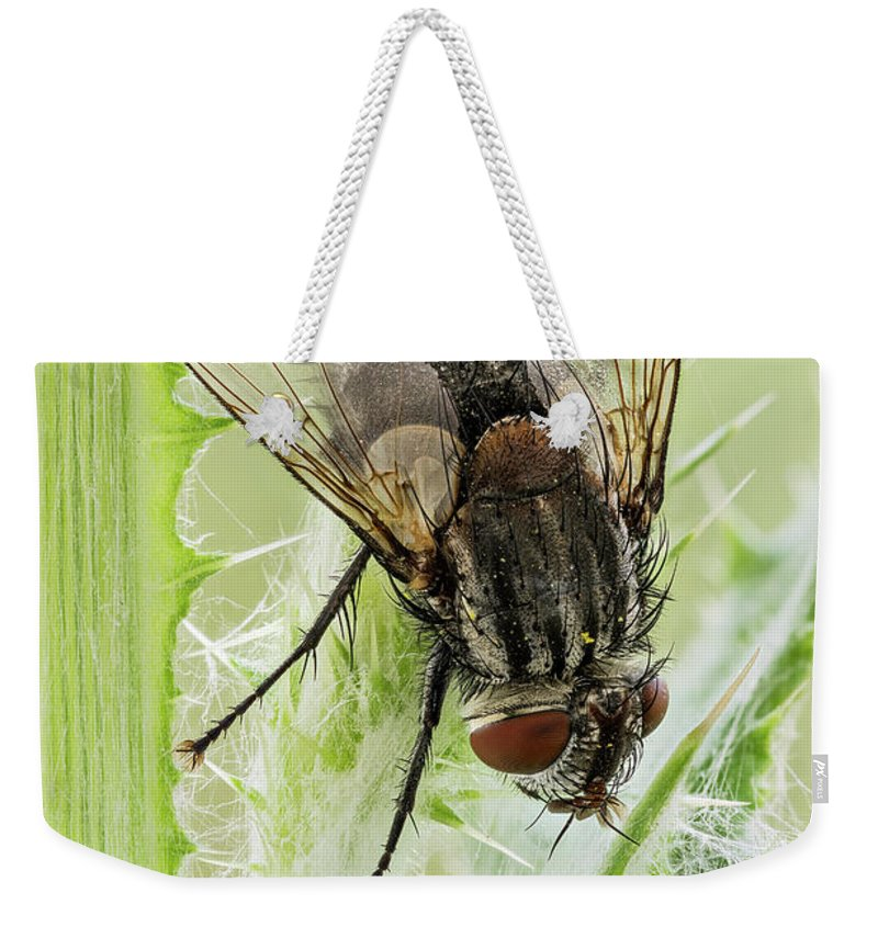 Image Digitally Manipullated Weekender Tote Bag featuring the photograph Common House Fly 0.9x by Javier Torrent
