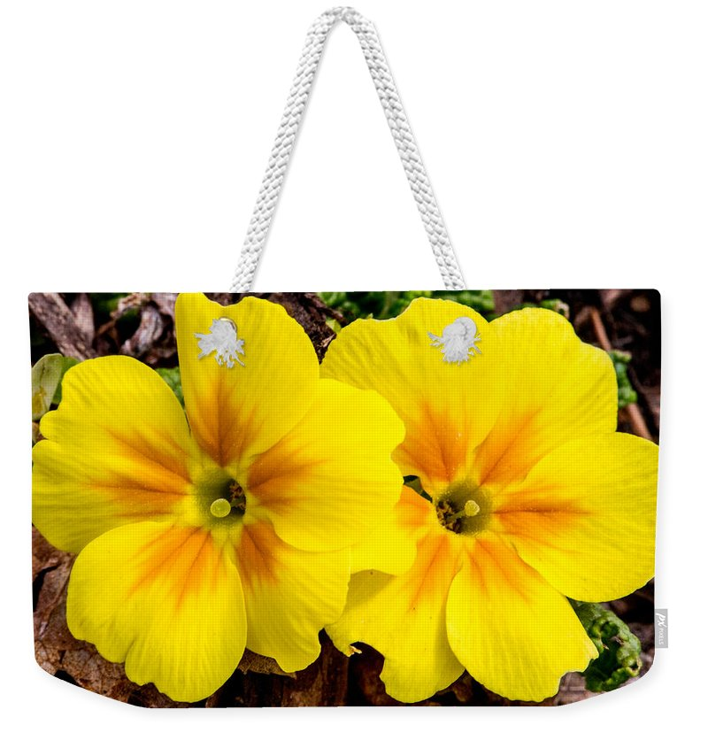 Primulaceae Weekender Tote Bag featuring the photograph Common Primrose 1 by Douglas Barnett